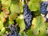 wine-country-apartments-sagrantino-produzione-vino